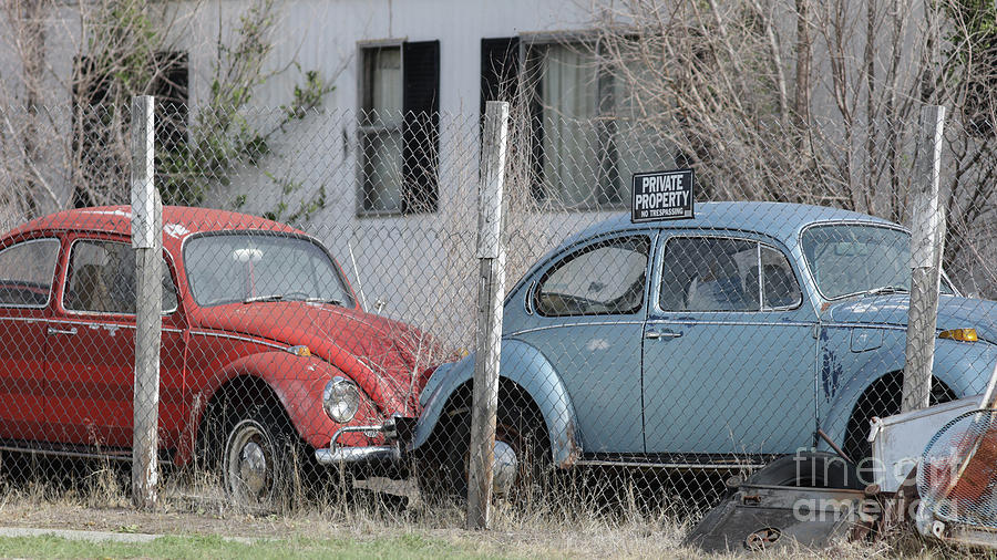 Car Photograph - Two Old Vintage Vw Beetles by Edward Fielding