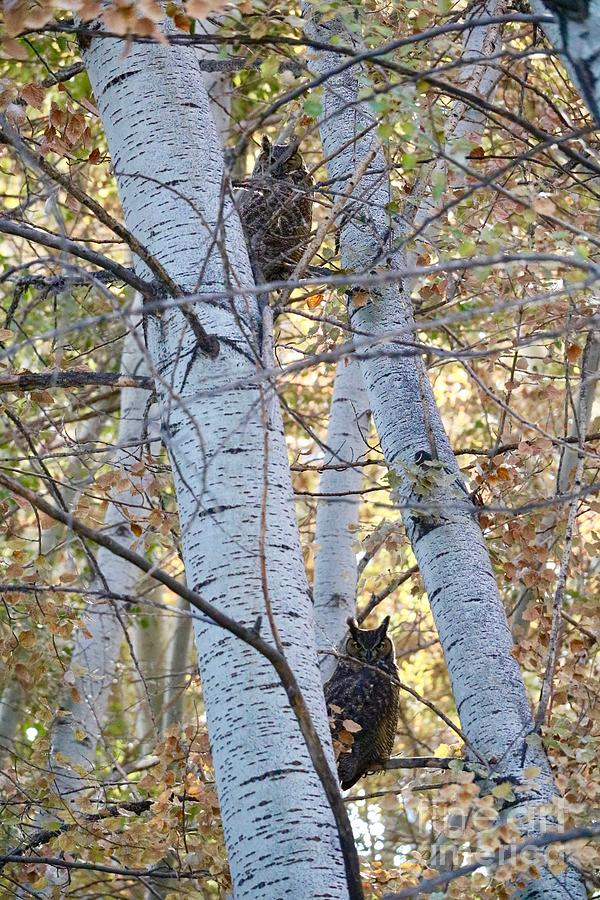 Two Owls on Autumn Branches by Carol Groenen