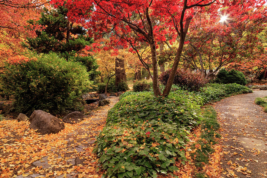 Two Paths In Lithia Park by James Eddy
