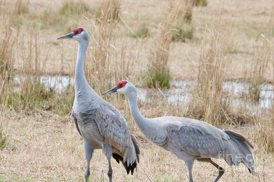 Two Sandhills in Field by Carol Groenen