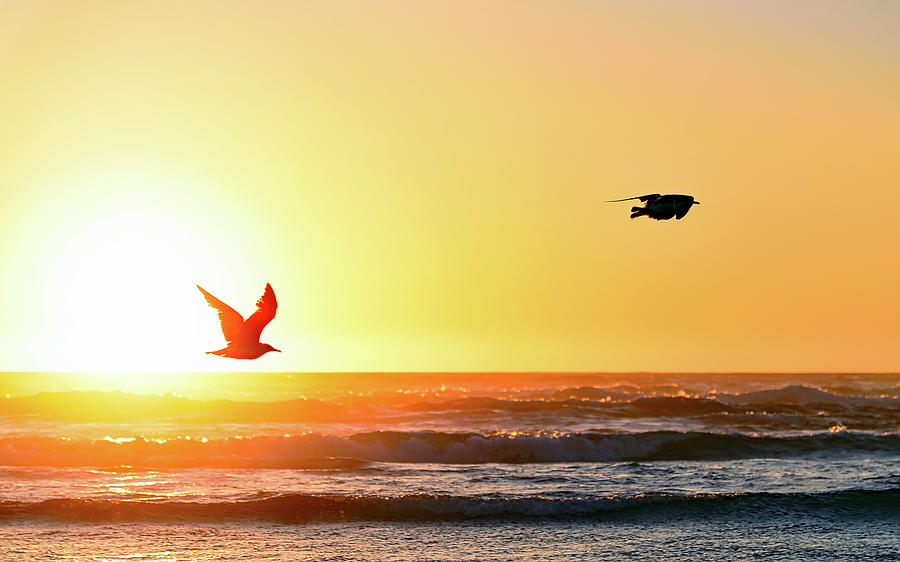 Two Seagulls flying in the Sunset by Johanna Froese