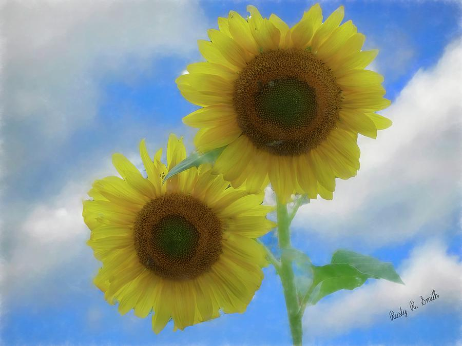 Two sunflowers. by Rusty R Smith