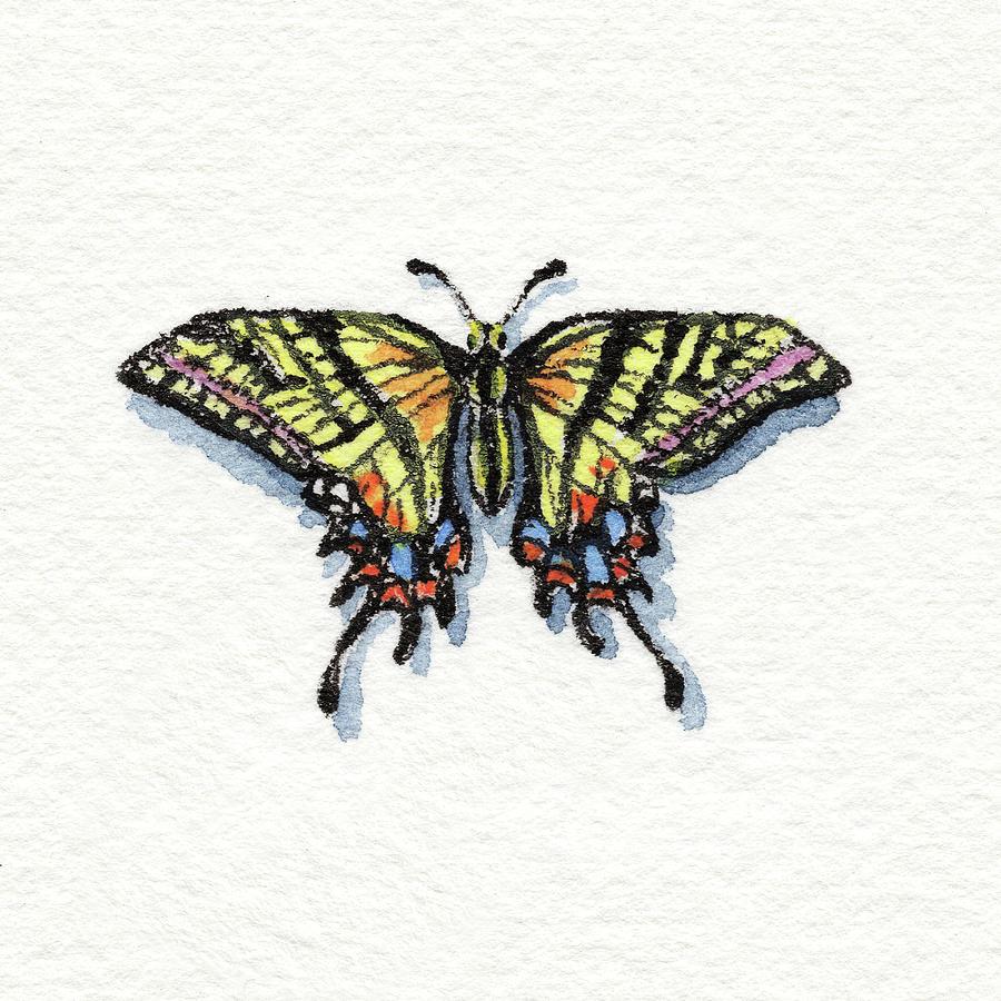 Two Tailed Swallowtail Papilio Multicaudata Daunus Watercolor Butterfly by Irina Sztukowski