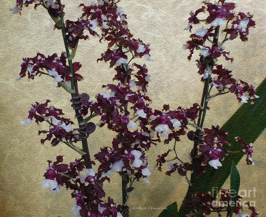Two Toned Orchids by Kathie Chicoine