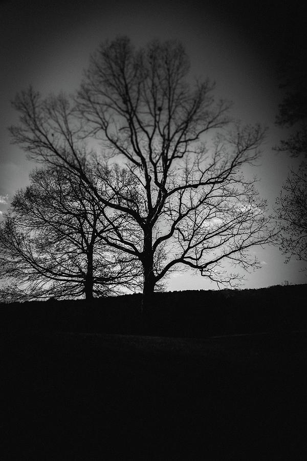 Two Tree Silhouette by Doug Camara