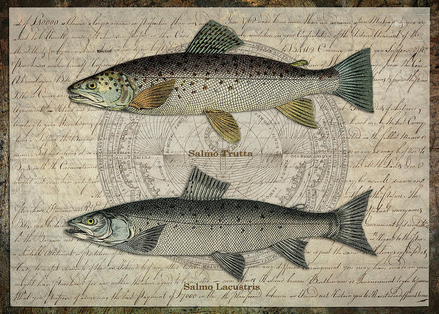 Two Trout by Terry Kirkland Cook