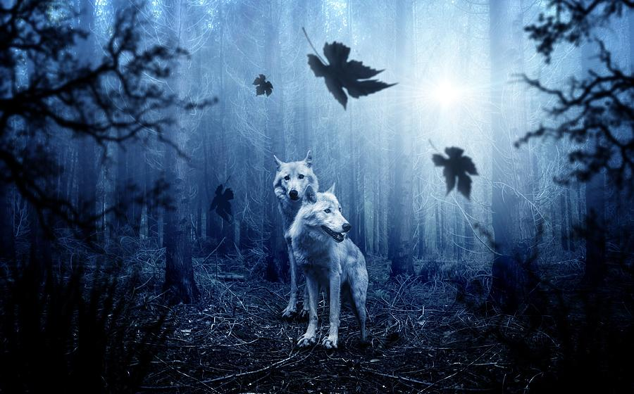 Two wolves by Top Wallpapers