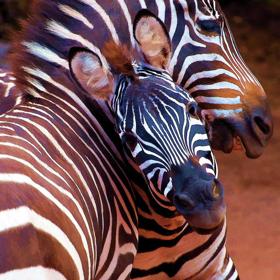 Two Zebras by OLena Art by OLena Art - Lena Owens