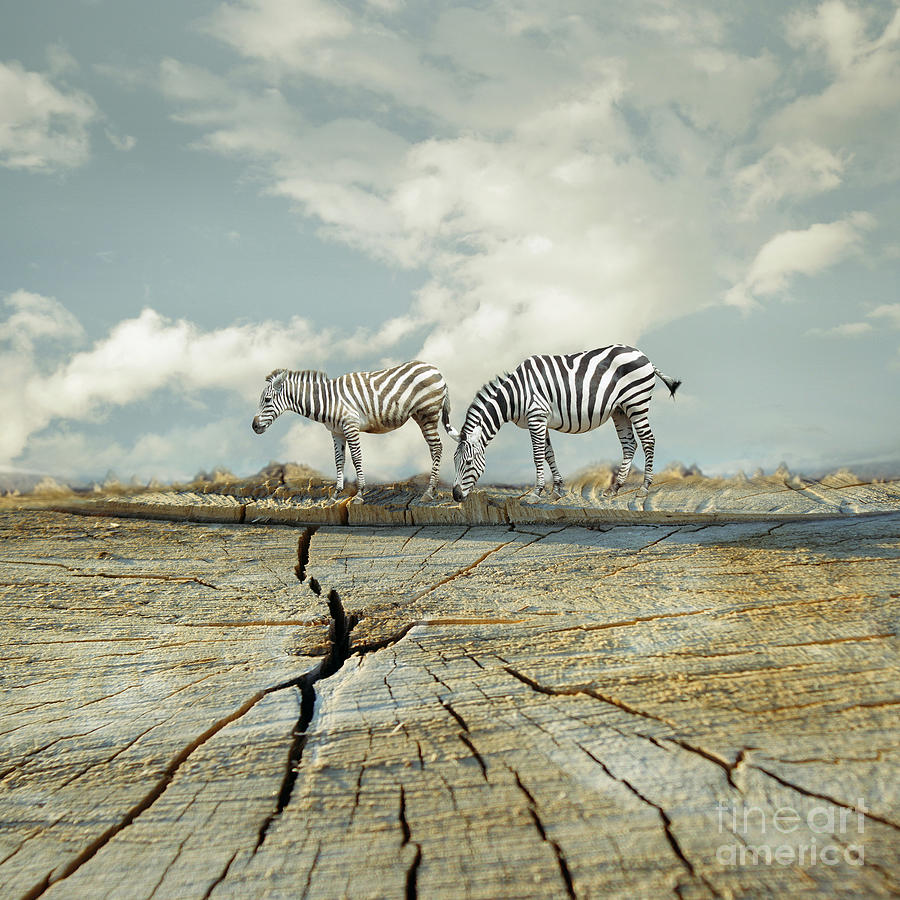 Illustrative Photograph - Two Zebras In A Surreal Landscape by Valentina Photos