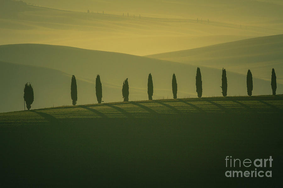 Landscape Photograph - Tuscan Cypress Trees in Hilly Landscape by Heiko Koehrer-Wagner