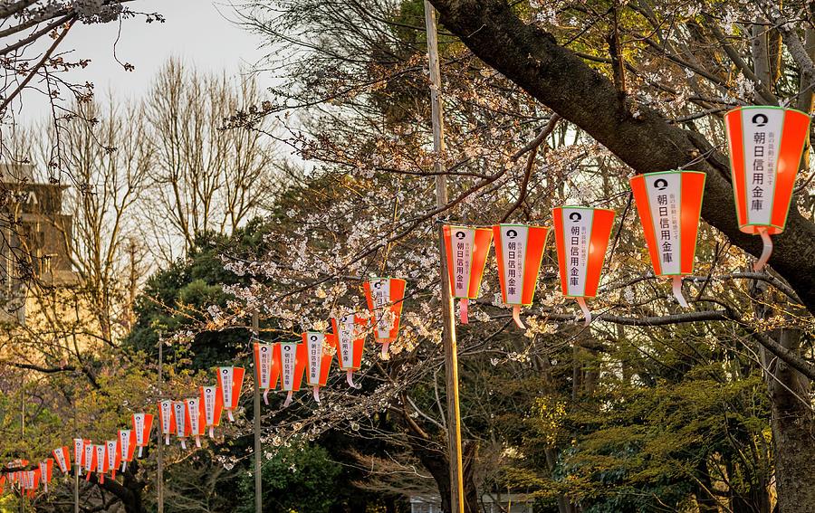 String Photograph - Ueno Sakura Matsuri by David L Moore