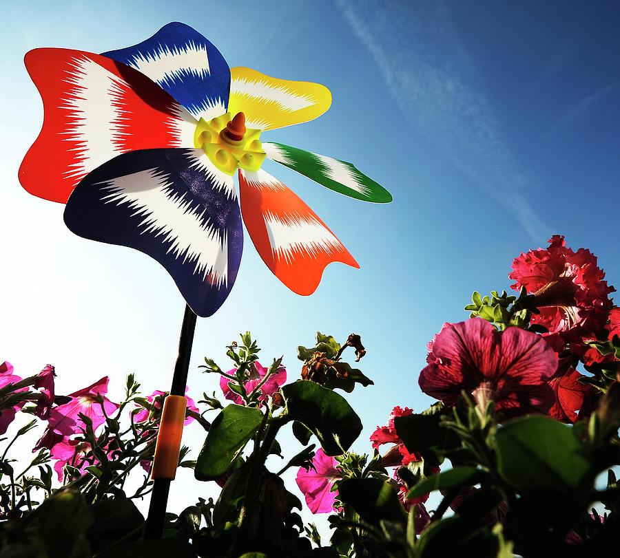 Ukraine, Kiev, Artificial Flower Among Photograph by Win-initiative