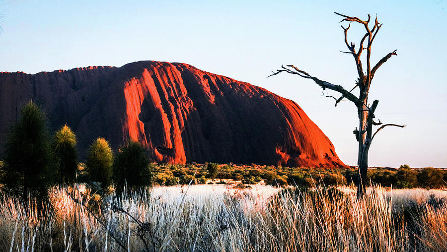 Uluru Sunrise by Lexa Harpell