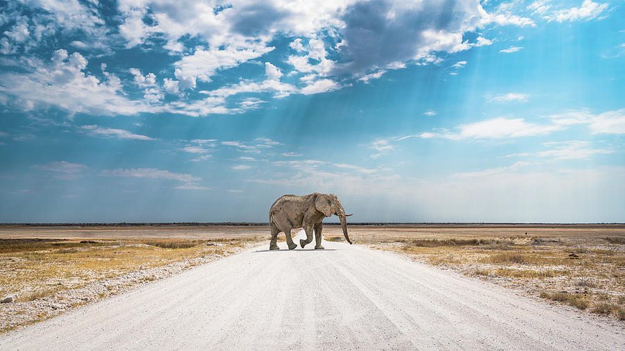 Elephant Photograph - Under An African Sky by Hamish Mitchell