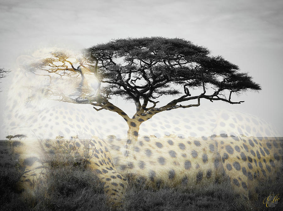 UNDER THE ACACIA by Elie Wolf