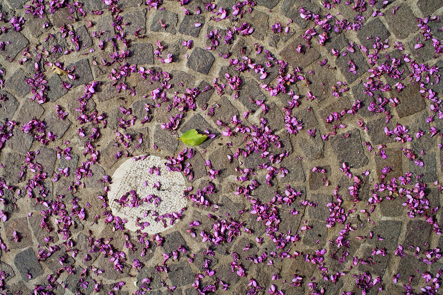 Under The Petals Photograph by Photo By Federico Patti©