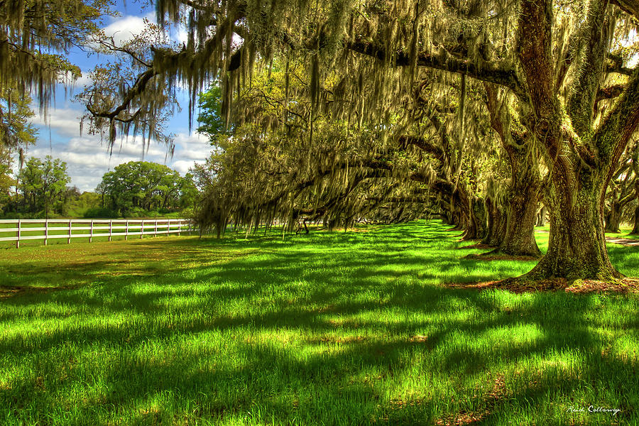 Under The Shadows Tomotley Plantation Live Oaks South Carolina Art by Reid Callaway
