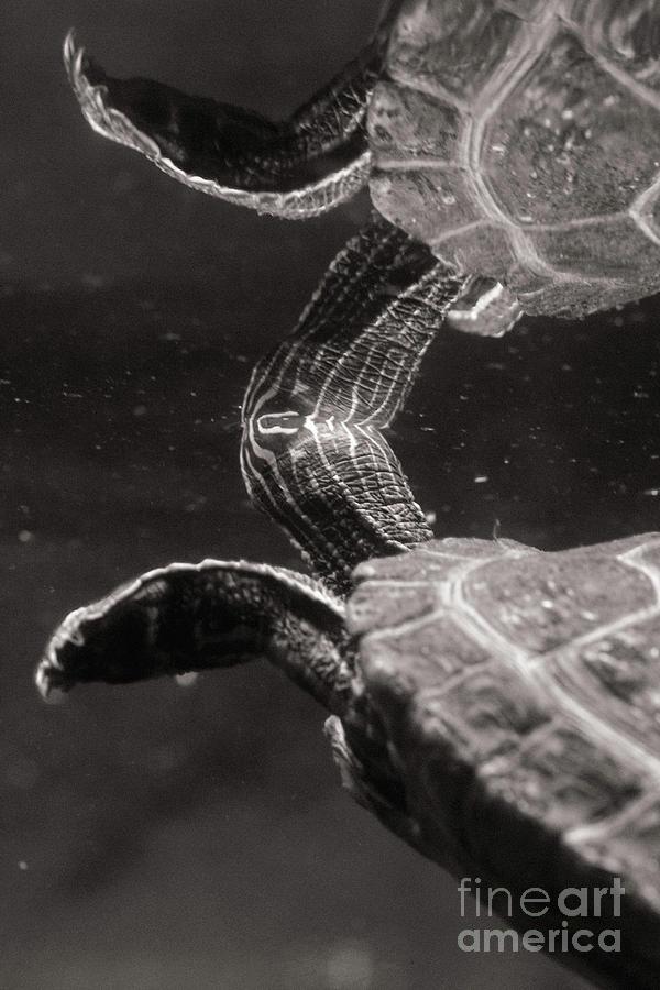 Animals Photograph - Undersurface by Nicki Hoffman
