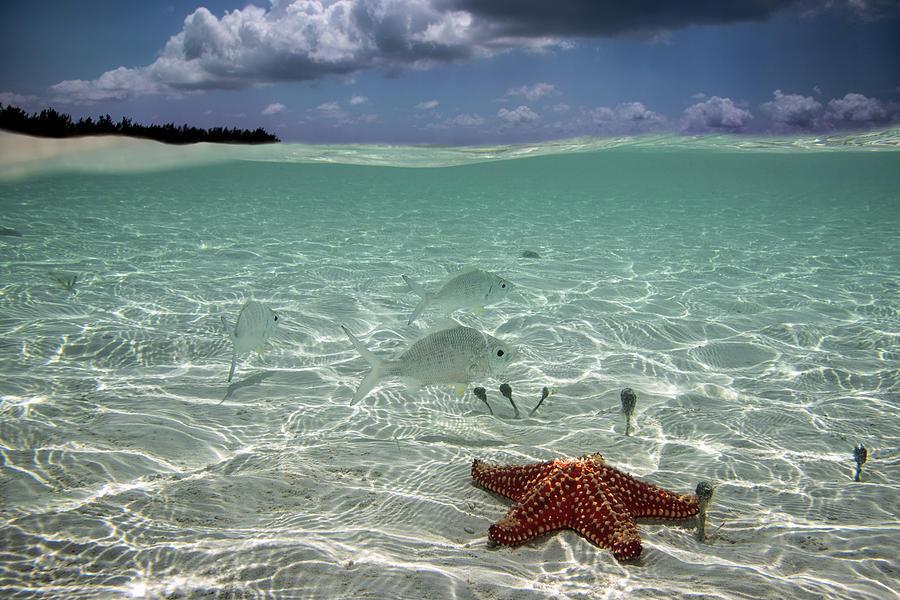 Underwater Photograph by Elena Pardini