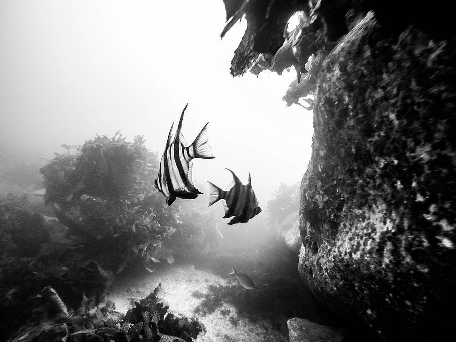 Underwater Fish by Carlene Smith