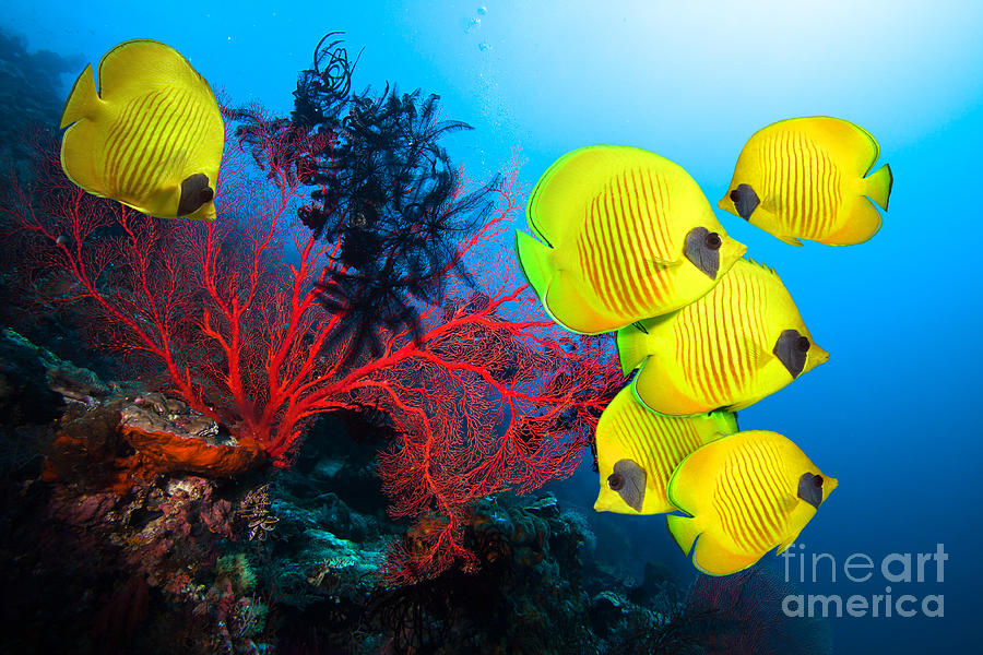Beauty Photograph - Underwater Image Of Coral Reef And by Frantisekhojdysz