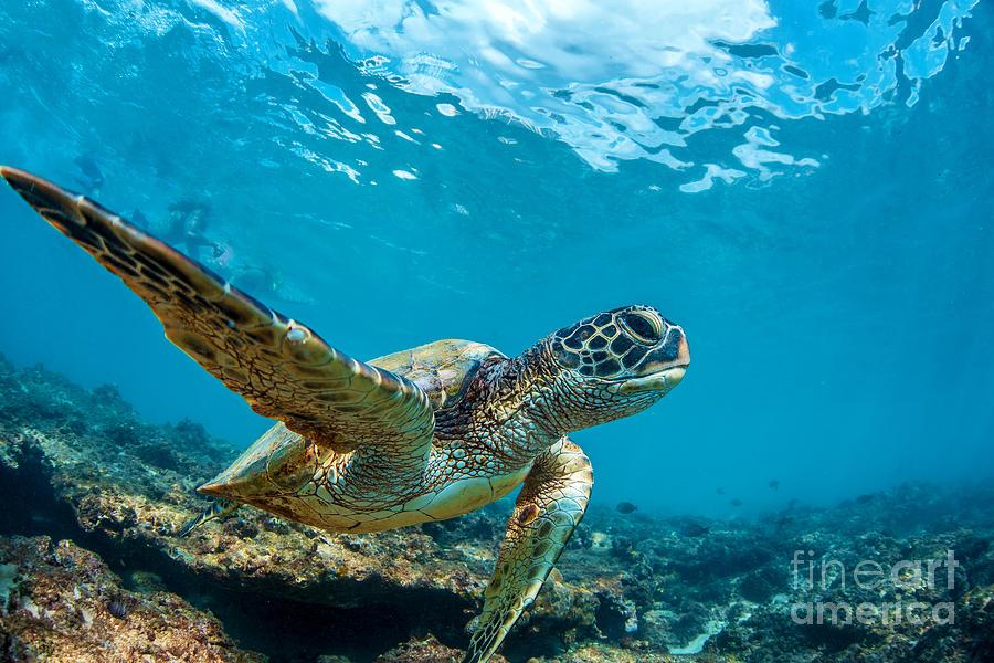 Loggerhead Photograph - Underwater Marine Wildlife Postcard. A by Willyam Bradberry