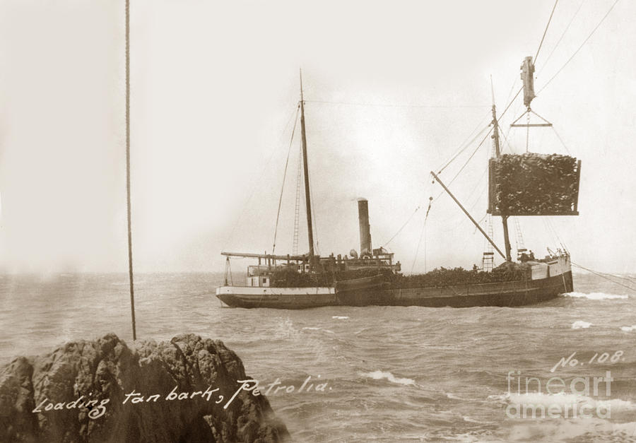 Unidentified S. S. ship loading Tan bark, from Mattole Valley, Petrolia by California Views Archives Mr Pat Hathaway Archives