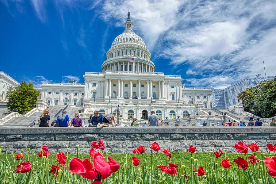 United States Capitol by Dana Foreman