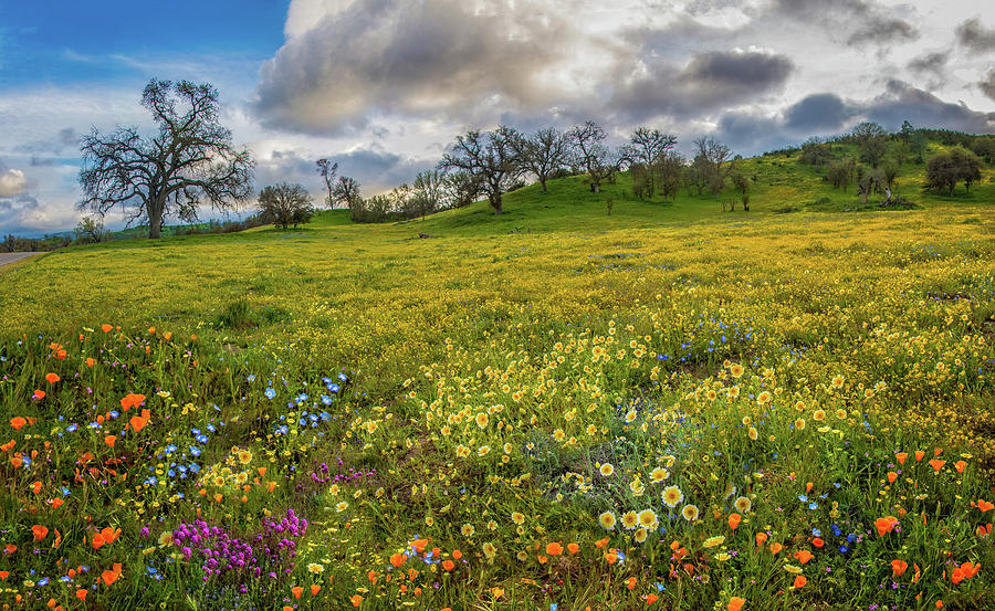 Unparalleled Beauty at Shell Creek - Superbloom 2019 by Lynn Bauer
