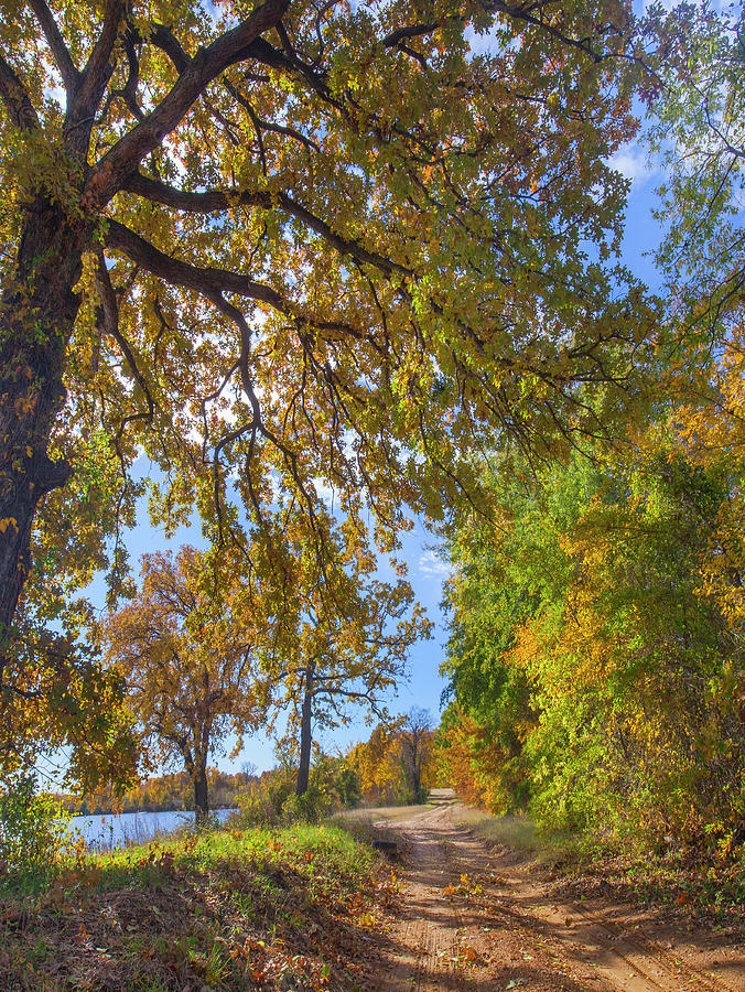 Mp Photograph - Autumn Lake And Trees by Tim Fitzharris