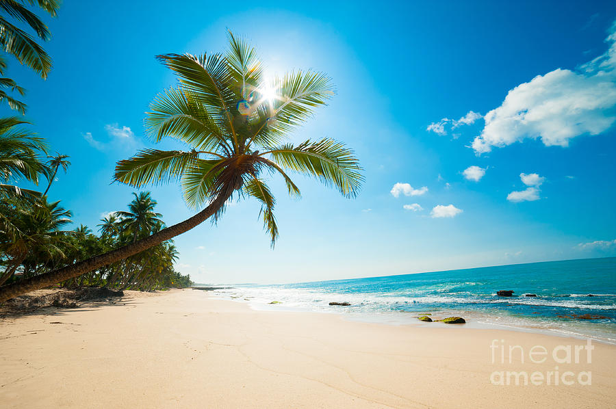 Untouched Photograph - Untouched Tropical Beach In Sri Lanka by Anton Gvozdikov