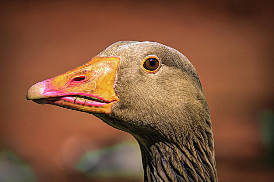 Up close with a goose by Scott Lyons