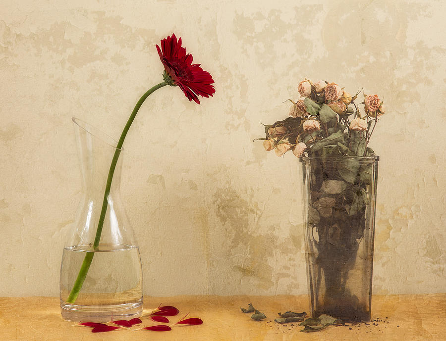 Flower Photograph - Upstairs, Downstairs by Dani Bs.