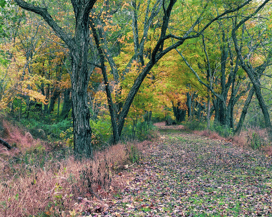 Upstate NY Late Autumn by Amelia Pearn