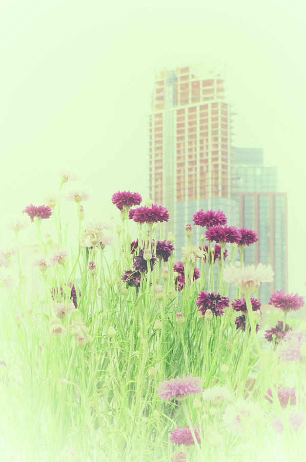 Urban Wild Flower Dream by Cate Franklyn
