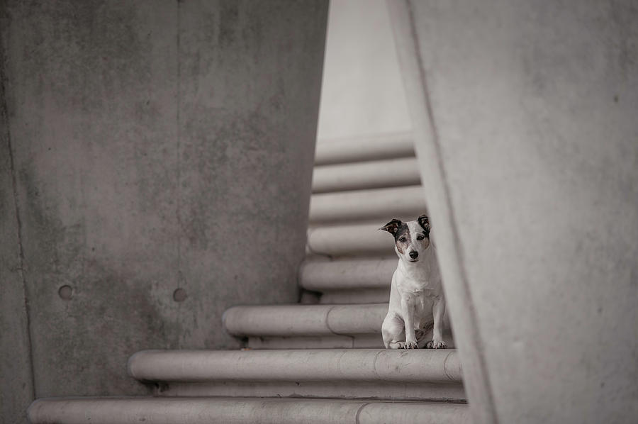 Dogs Photograph - Urbanity by Heike Willers