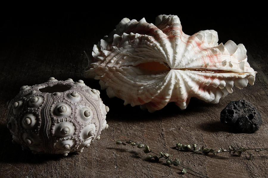 Urchin and Bivalvia Shell  by Richard Rizzo