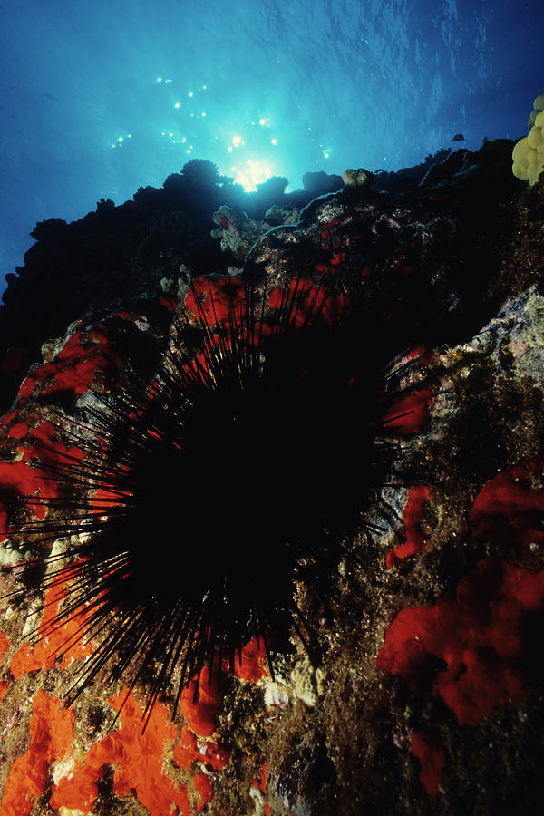Urchin Power Photograph by Tammy616