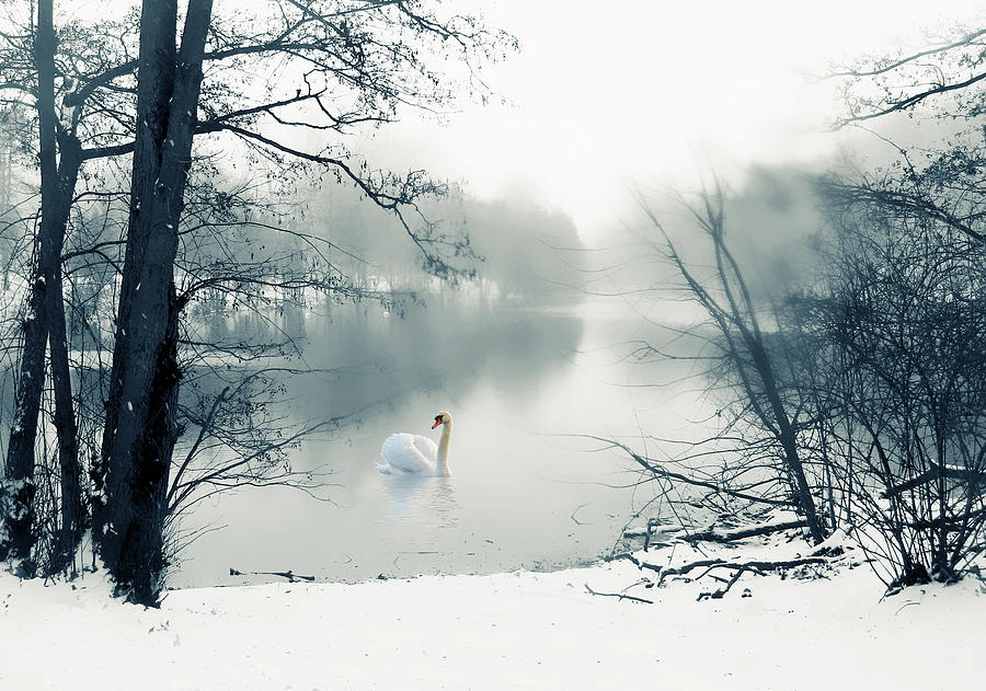 Winter Photograph - Swan Song Blue by Jessica Jenney