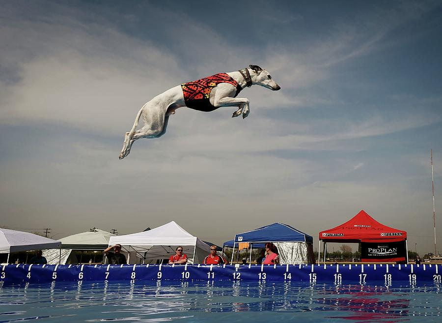 Us-animals-record-jump Photograph by Mark Ralston