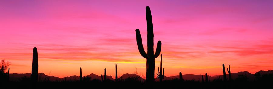Usa, Arizona, Organ Pipe National Photograph by Robert Glusic