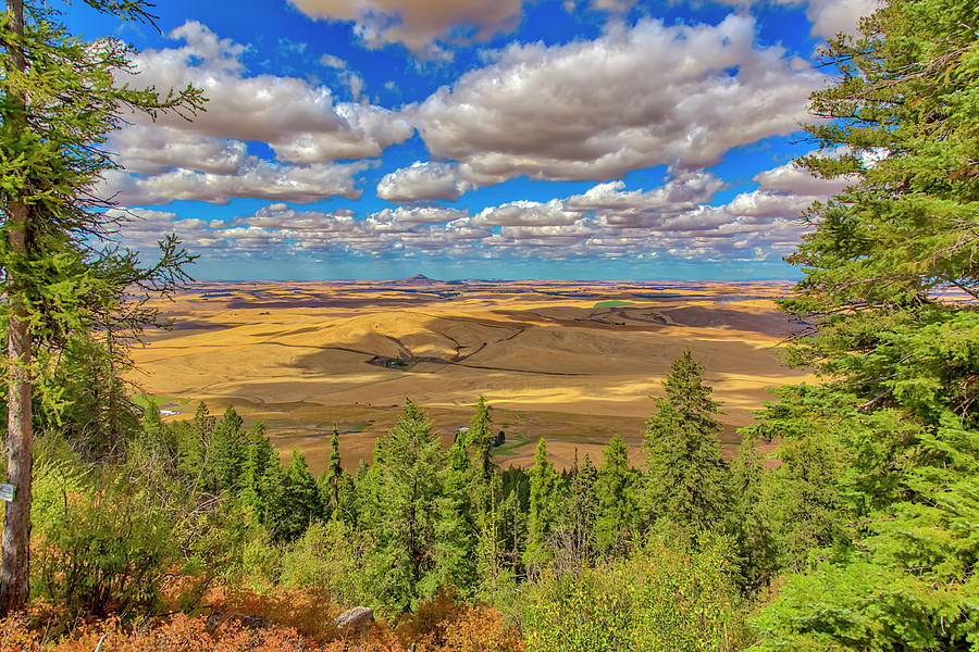 Agriculture Photograph - Usa, Colorado, Colfax by Jaynes Gallery