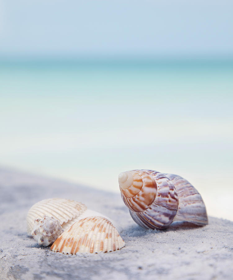 Usa, Florida, St. Petersburg, Focus On Photograph by Vstock Llc