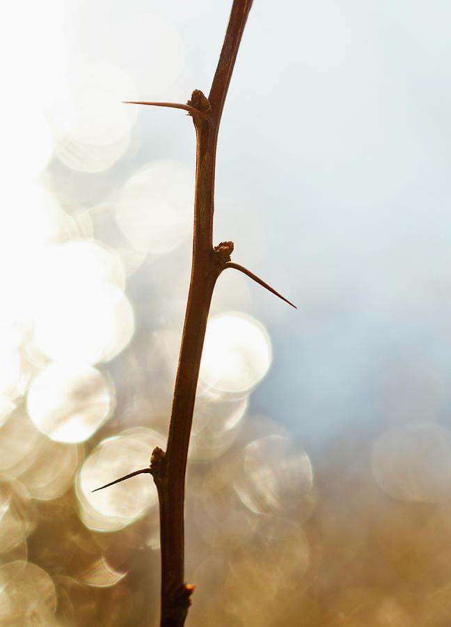 Usa, Pennsylvania, Poconos, Close-up Of Photograph by Tetra Images