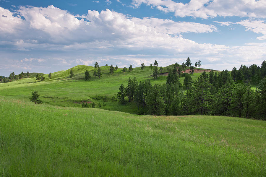 Usa, South Dakota, Meadow In Custer Photograph by Tetra Images