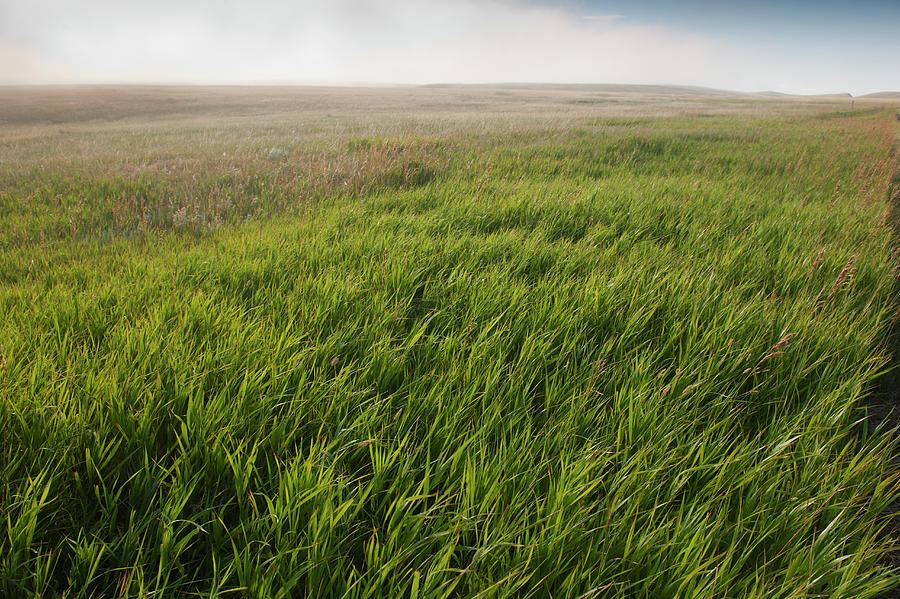 Usa, South Dakota, Prairie Grass In Photograph by Tetra Images