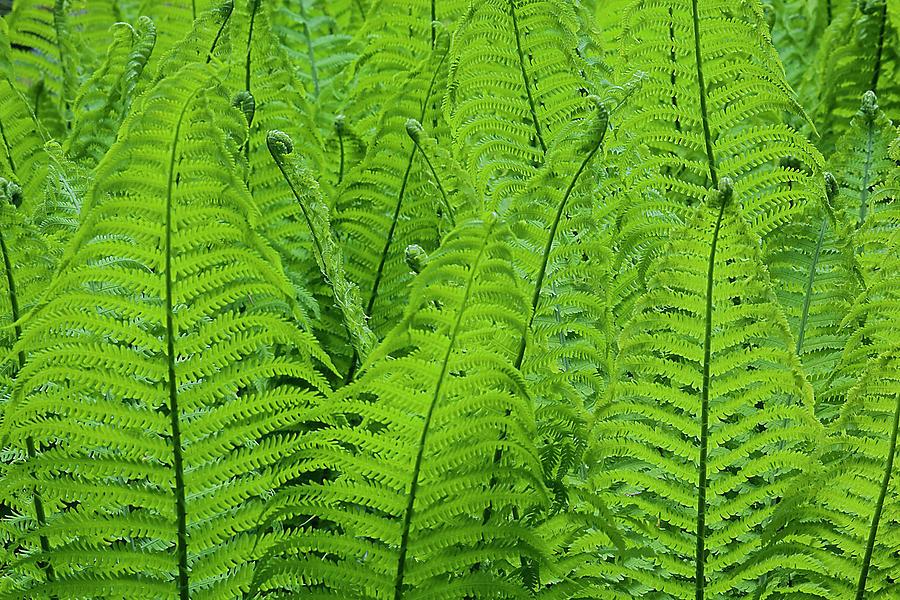 Arboretum Photograph - Usa, Washington State, Seattle by Charles Gurche