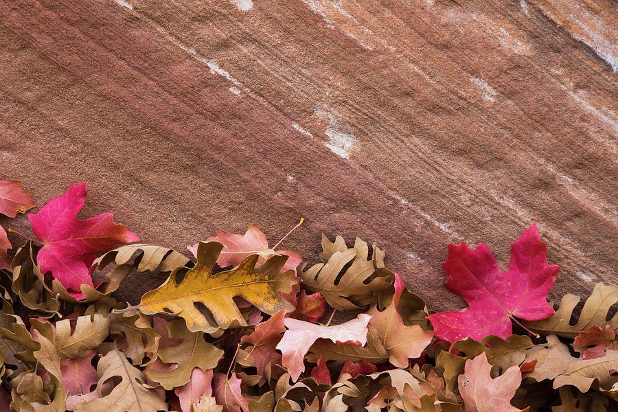 Autumn Photograph - Utah, Autumn Leaves Piled by Brenda Tharp