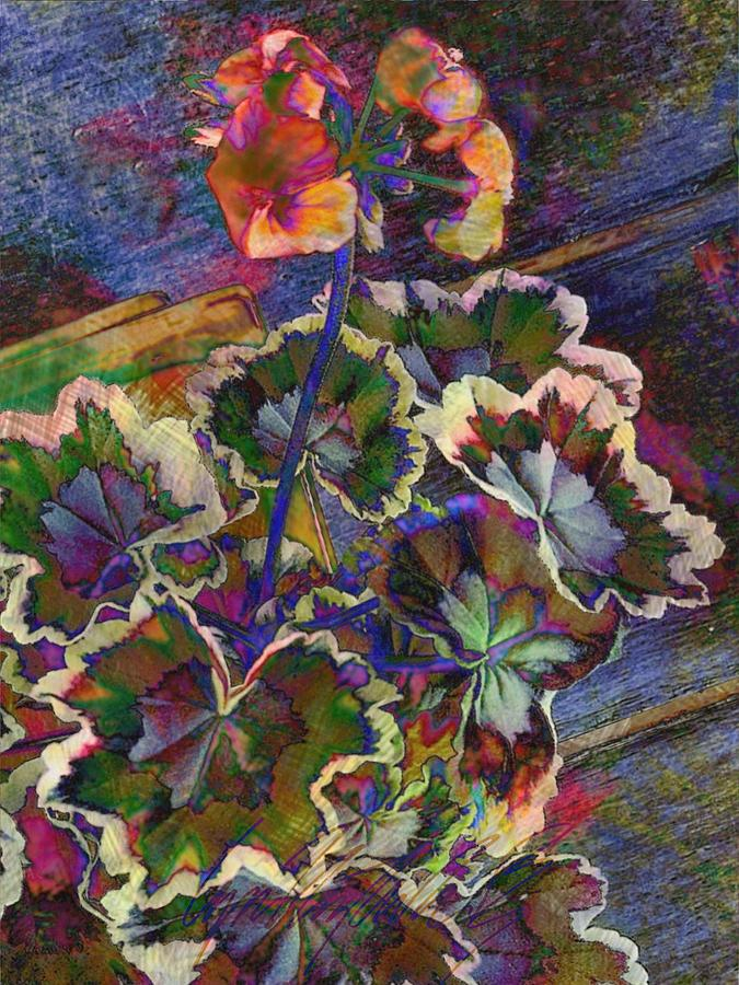 V Textured Variegated Geranium Plant - Vertical by Lyn Voytershark