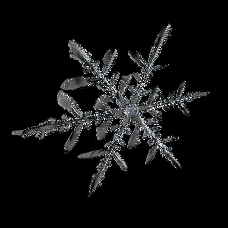 Valentine Snowflake Photograph by Brian Caldwell